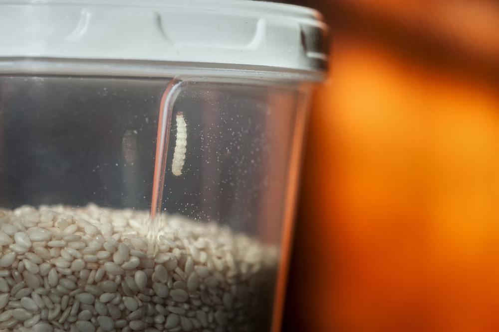 Mites-alimentaires-débarrasser-naturellement