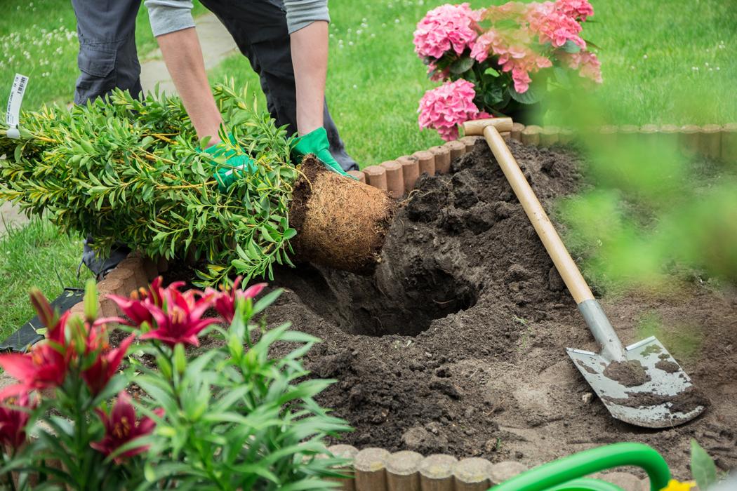 travaux de jardin a faire au printemps (1)